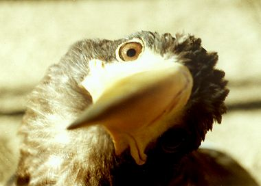 Пиратство mp3 и орел